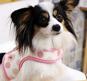 Tenderfoot Pinka Dog Harness & Leash