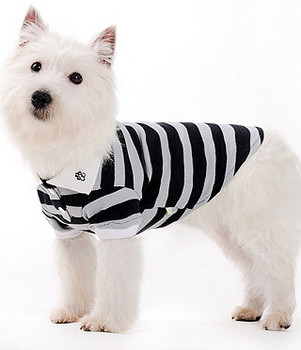PP Striped Polo Dog Shirt - Black/Grey