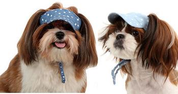 Fifi Dog Visor Cap