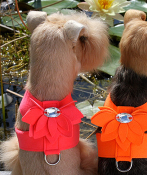Electric Pink Water Lily Tinkie Dog Harness