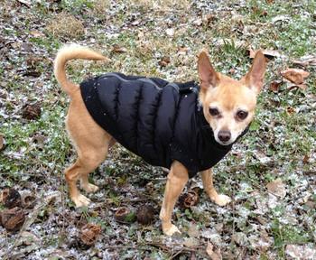 ca51c796d4495 Hip Doggie Reversible Silver Argyle Dog Puffer Vest Jacket ...