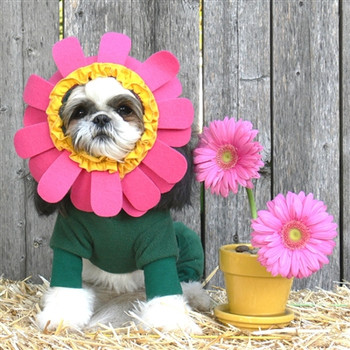 Flower Dog Costume Dog Costume - Small & Big Dogs