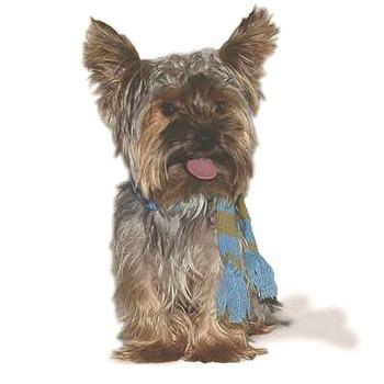 Urban Blue Stripe Dog Scarf