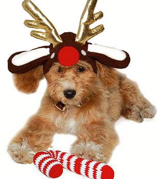 Reindeer Antlers Dog Hat
