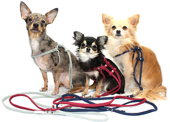 Step In Dog Harnesses - Super Soft Micro Suede - Black