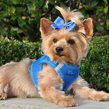 American River Choke Free Step In Dog Harness, Royal Blue 1 - 50 lbs