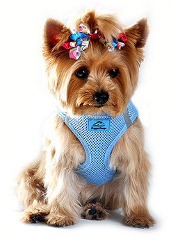 American River Choke Free Step In Dog Harness, Light Blue 1- 50 lbs