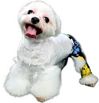 Sebastian Dog Swim Trunk or Board Shorts