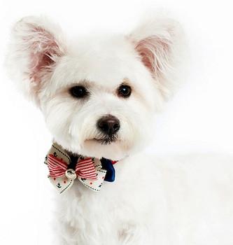 EasyBow Nautical 2 Bow Dog Collar Accessory