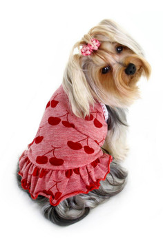 Red Cherry Knit Dog Dress