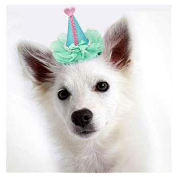 Pretty Birthday Party Dog Hat Clip On - Bright Pink