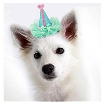 Pretty Birthday Party Dog Hat Clip On - Aqua