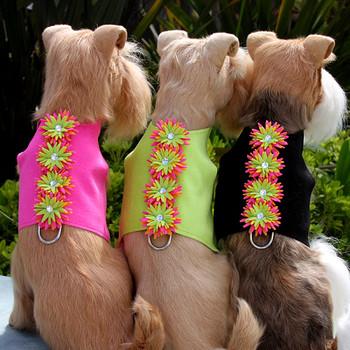 Sea Urchin Bailey II Dog Harness by Susan Lanci