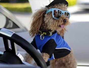 3cd2532d552 Tropical Green Sun Protective Dog Visor Hats for Dogs