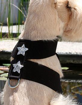Rock Star Dog Tinki Harness by Susan Lanci - 30 Colors