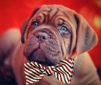 Pet Dog Christmas Bow Tie - Mint Stripe
