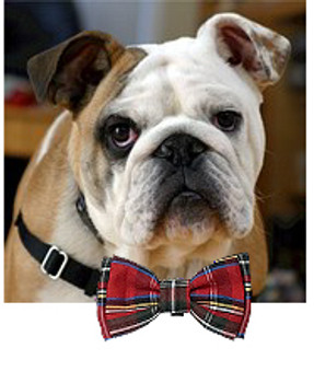 Pet Dog Christmas Bow Tie - Red Plaid