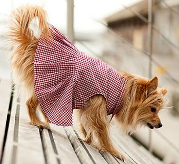 Port Red Gingham Dog Dress
