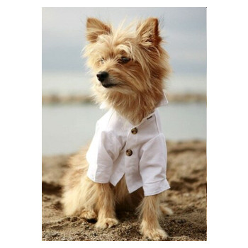 White Cotton Club Dog Shirt