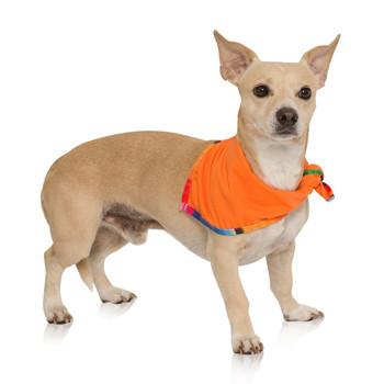 Dog Bandana 2-Pack - Sarape / Tagate