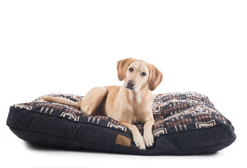 Harding Pet Napper Pendleton Dog Bed