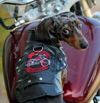 Biker Dawg Dog Jacket - Black