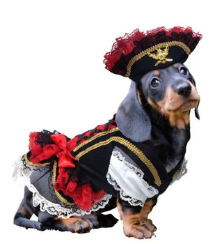 Swashbuckler Pirate Girl Pet Dog Costume