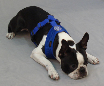 Freedom II Pet Dog Harness - Hunter Green