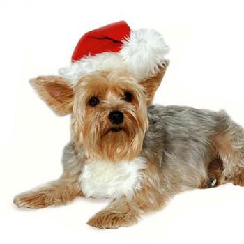 Dog Visors & Hats  PupRwear Dog Boutique