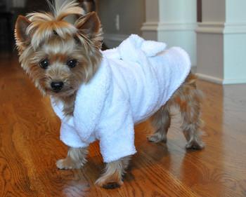 White Silver Tiara Pet Dog Bathrobe
