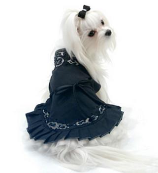 Midnight in Paris Dog Dress