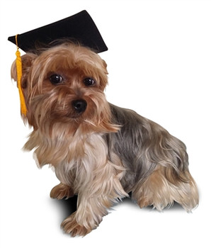 Dog Black Graduation Cap