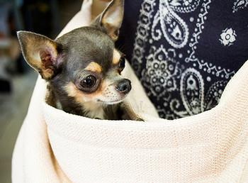 Vienna Pet Dog Sling - Eggshell
