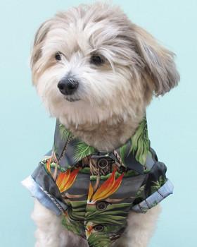 Cotton Hawaiian Gray Rustic Dog Shirt