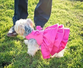 Pink Sapphire Couture Designer Madison Dog Dress