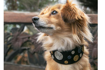 Metallic Dots African Beaded Collar & Leash Collection
