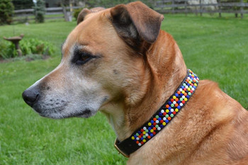 Confetti New African Beaded Collar & Leash Collection