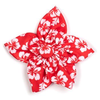 Aloha Coral Pet Dog Collar Flower