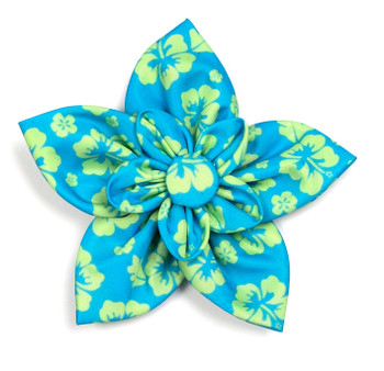 Aloha Turquoise Pet Dog Collar Flower