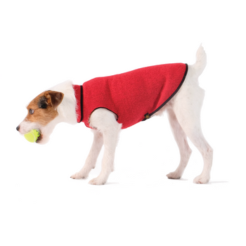 Pet Dog Gold Paw Eco Fleece - Ruby Red