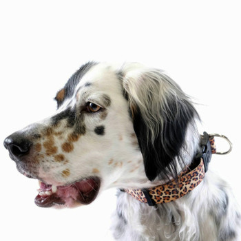 "Standard Dog Side Release 1"" Collar - Leopard"