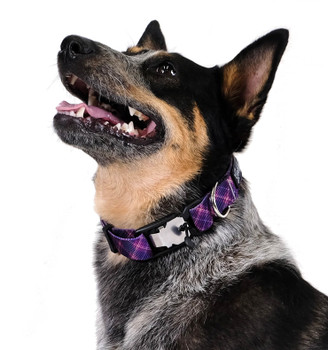"""Swiftlock Dog Side Release 1"""" Collar - Mulberry Plaid"""