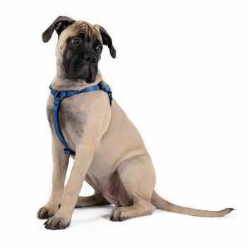 Step-in Swiftlock Dog Harness - Marine
