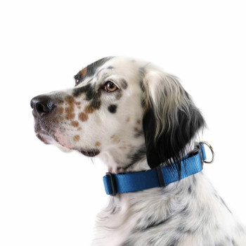 "Standard Dog Side Release 1"" Collar - Marine"