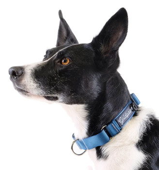 Standard Dog Martingale Collar - Marine