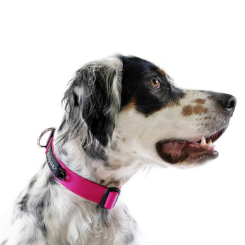 "Standard Dog Side Release 1"" Collar - Fuchsia Pink"