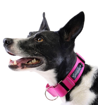 Standard Dog Martingale Collar - Fuchsia Pink