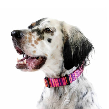 "Standard Dog Side Release 1"" Collar - Sunset"