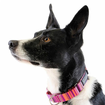 Standard Dog Martingale Collar - Sunset