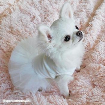 Puppy Angel Tutu Dog Dress - Ivory
